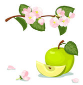 Green apple and flowers. — Stock Vector