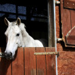 Stock Photo: Horse in stable