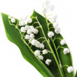Lily-of-the-valley over white - Stock Photo