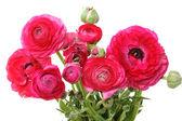 Flores vermelhas — Fotografia Stock