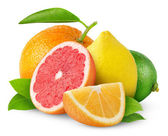 Citrus fruits — 图库照片