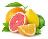 柑橘类水果 — 图库照片
