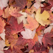 Fall background — Photo