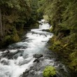 McKenzie River, Oregon — Photo