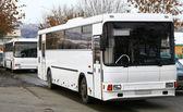 White buses — Stock Photo