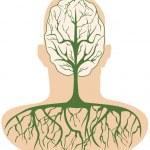 Brain tree — Stock Vector #7500748