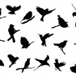 Bird silhouettes collection — Stock Vector