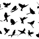 Bird silhouettes collection — Stock Vector