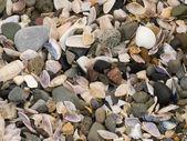 Sea debris texture — Stock Photo