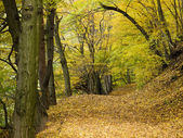 Colorful autumn forest path — Stock Photo