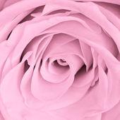Roze dicht steeg — Stockfoto