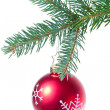 Ball hanging from spruce christmas tree — Stock Photo #7656721