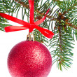 Red christmas ball hanging from tree — Stock Photo #7656722