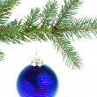 Christmas ball on branch - Foto de Stock