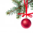 Red christmas ball hanging from tree — Stock Photo #7656751