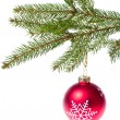 Red ball hanging from spruce christmas tree — Stock Photo #7656760