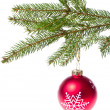 Red ball hanging from spruce christmas tree - Foto de Stock