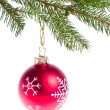 Red ball hanging from spruce christmas tree — Stock Photo #7656779