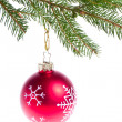 Red ball hanging from spruce christmas tree — Stock Photo