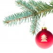 Red christmas ball on branch — Stock Photo #7656927