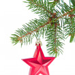 Red christmas star hanging from tree — Stock Photo #7657151