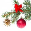 Christmas ball on branch -  