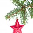 Red christmas star hanging from tree — Stock Photo #7657304