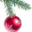 Ball hanging from spruce christmas tree — Stock Photo