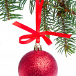 Red christmas ball hanging from tree — Stock Photo #7657413