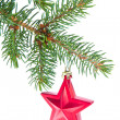 Red christmas star hanging from tree — Stock Photo #7657480