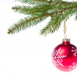 Royalty-Free Stock Photo: Red ball hanging from spruce christmas tree