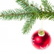 Red christmas ball on branch — Stock Photo #7657644