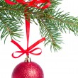 Red christmas ball hanging from tree — Stock Photo #7657853
