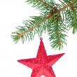 Red christmas star hanging from tree - Stockfoto