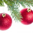 Red christmas ball hanging from tree — Stock Photo #7657918