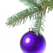 Ball hanging from spruce christmas tree — Stock Photo #7657973