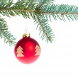 Red christmas ball on branch — Stock Photo #7658005