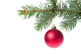 Christmas ball on branch — Stock Photo