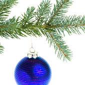 Christmas ball on branch — Stock Photo
