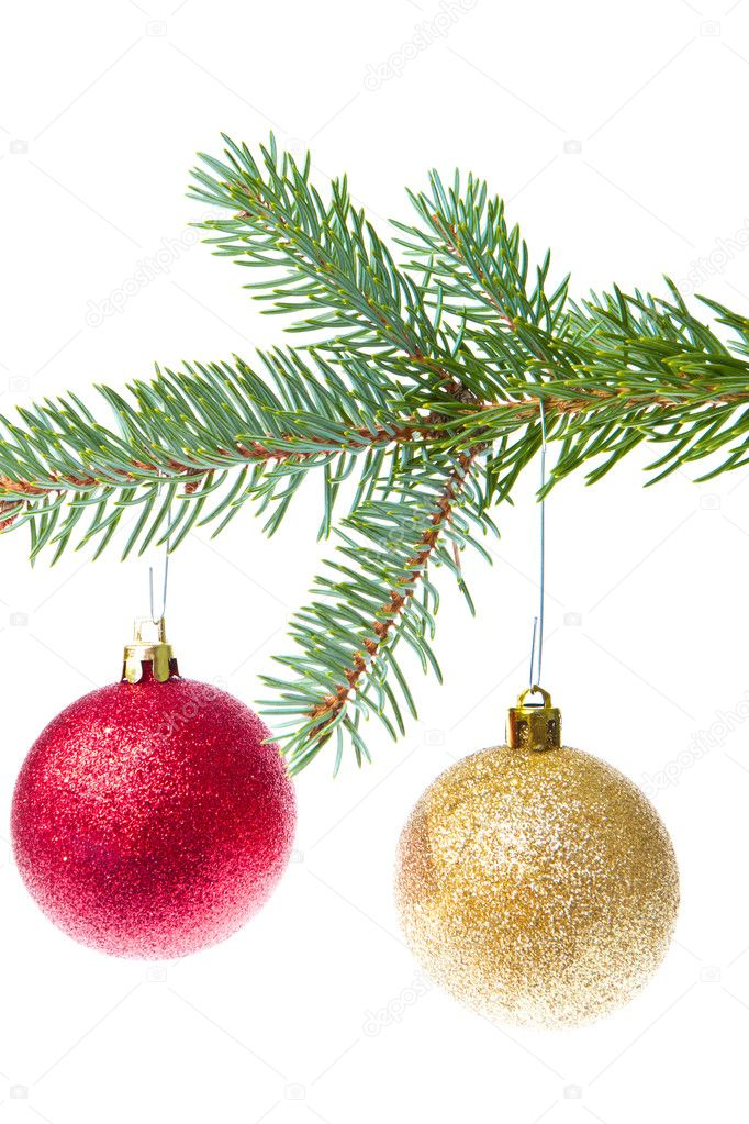 Red christmas ball hanging from tree isolated on white background  Stock Photo #7656770