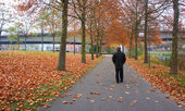 City Park in autumn — Stock Photo