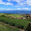Terraced vineyards of Lavaux at Lake Geneva, Switzerland - Stock Photo