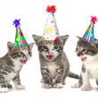 Stock Photo: Birthday Song Singing Kittens on White Background