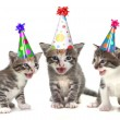 Birthday Song Singing Kittens on White Background - Photo