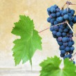 Vibrant grapes closeup photo — Stock Photo #7412665