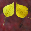 Yellow leaves on the wet glass — Stock Photo