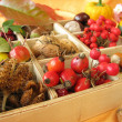 Stock Photo: Collecting box with walnuts, chestnuts and other fall fruits