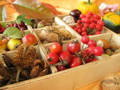 Collecting box with walnuts, chestnuts and other fall fruits — Stock Photo