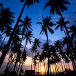 Palm Tree Sunset — Stock Photo #7680478