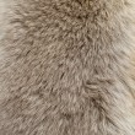 Fur texture — Stock Photo #7318893